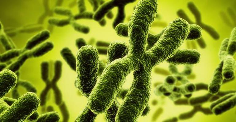 Хромосомна теорія спадковості
