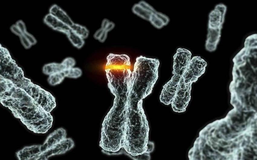 Хромосомні мутації