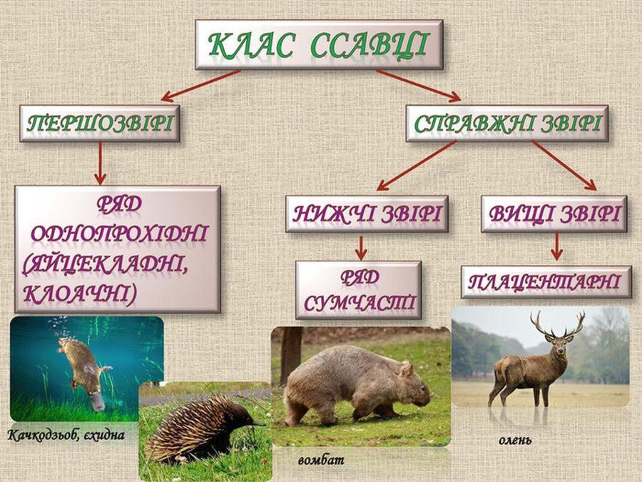 Клас ссавці - види