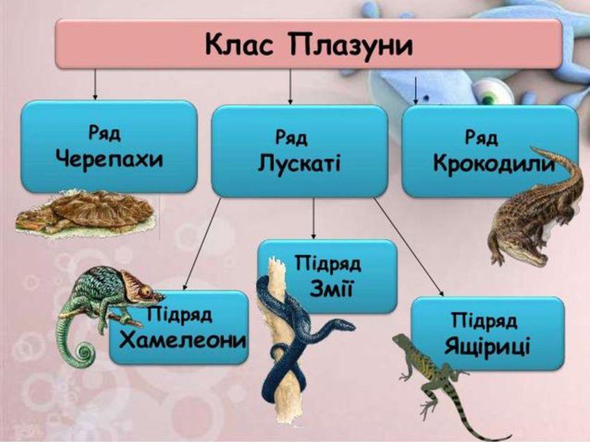 Класифікація плазунів