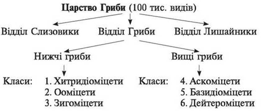 Класифікація царства Гриби