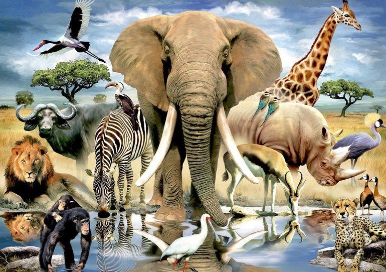 Класифікація тварин