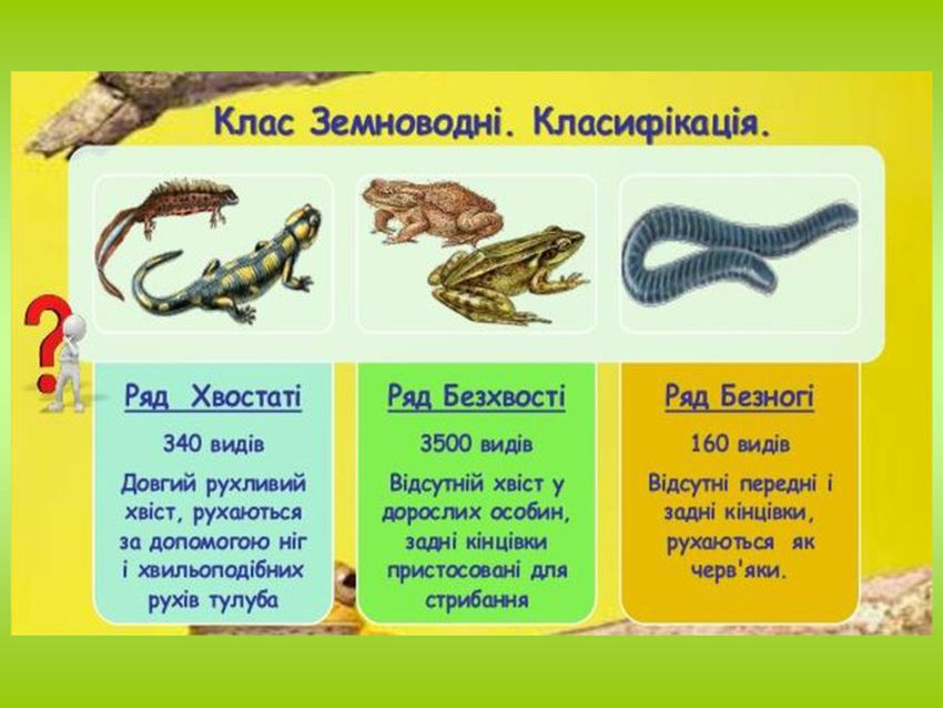 Класифікація земноводних