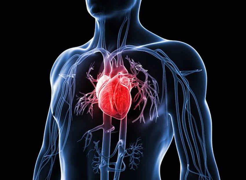 Кровоносна система людини - фото