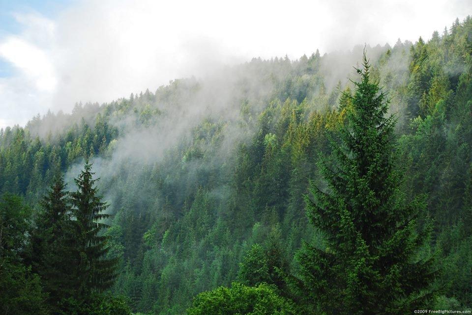 Ліс - фото2