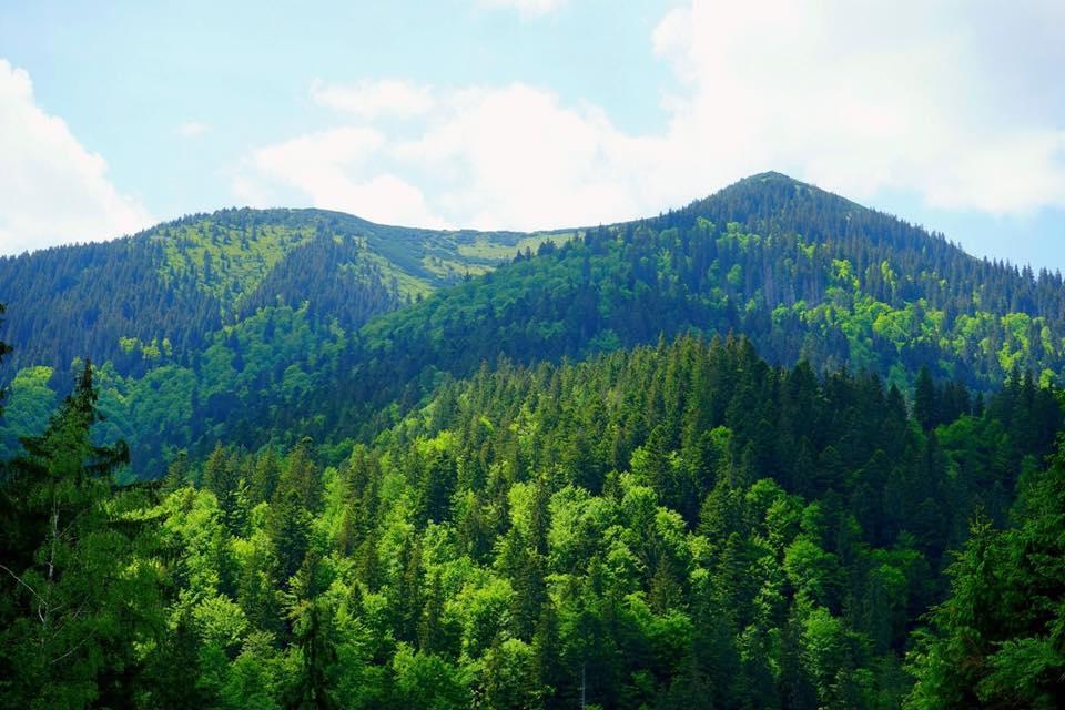 Ліс - фото3