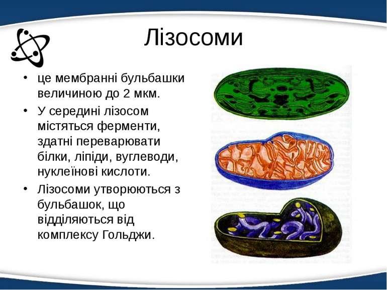 Лізосоми - визначення