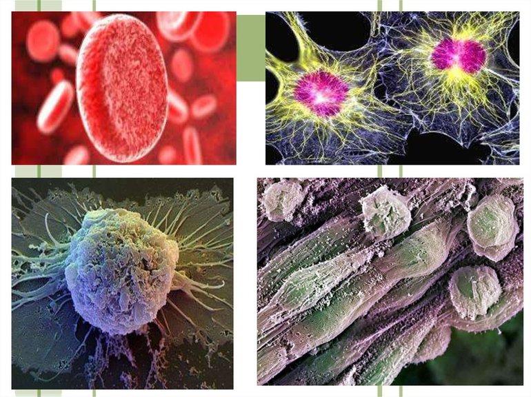 Методи вивчення клітини2