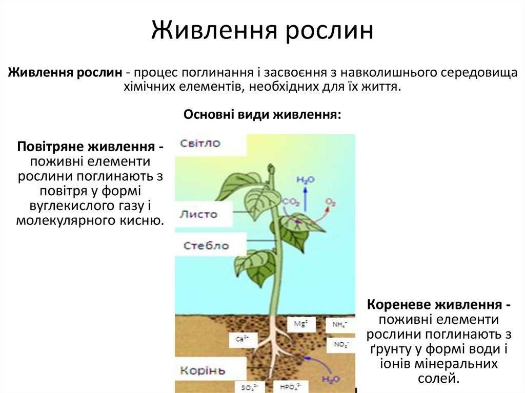 Мінеральне живлення рослин2