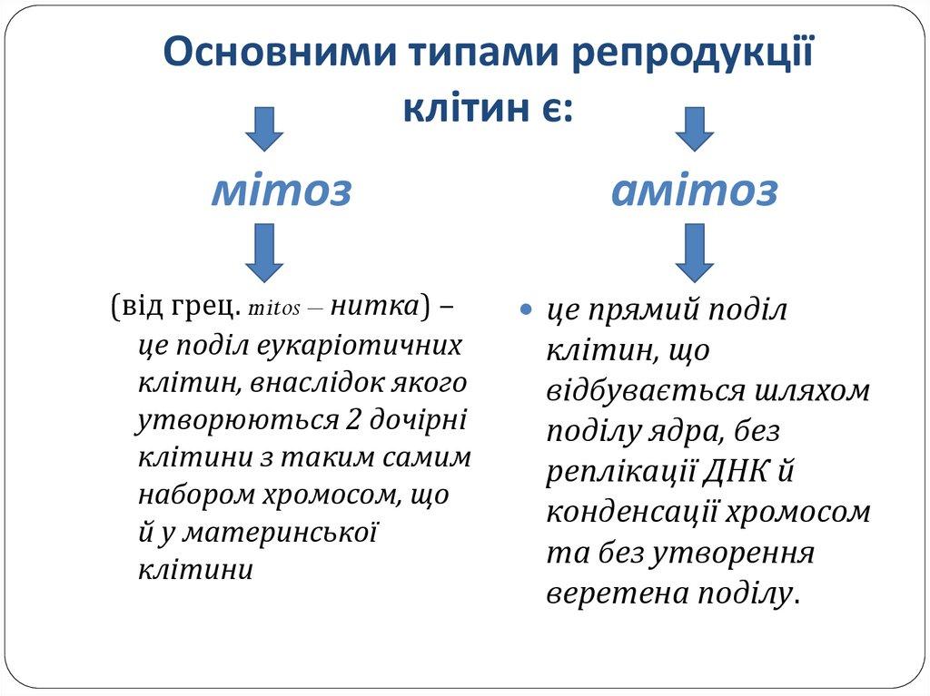 Мітоз і амітоз - порівняння