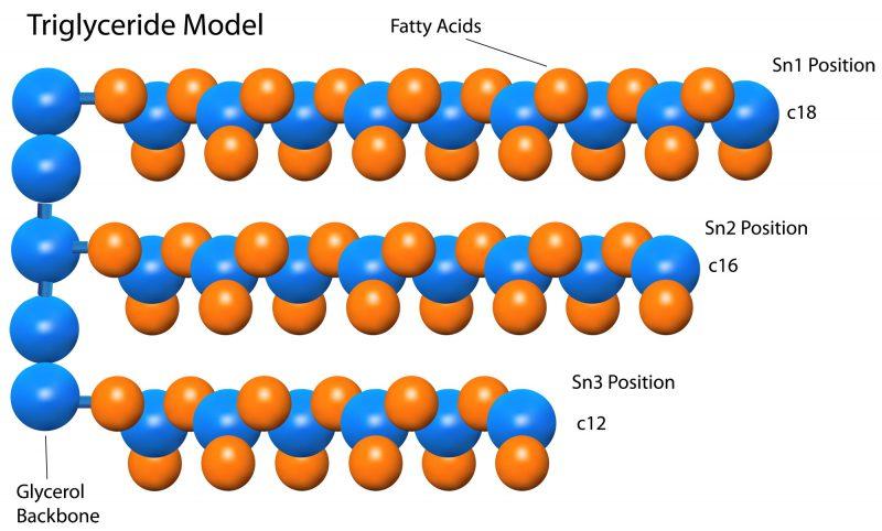 Модель тригліцеридів