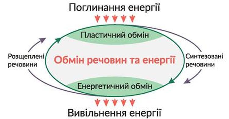 Обмін речовин та енергії