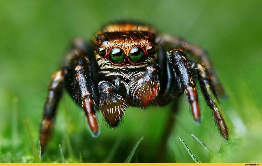 Очі павука