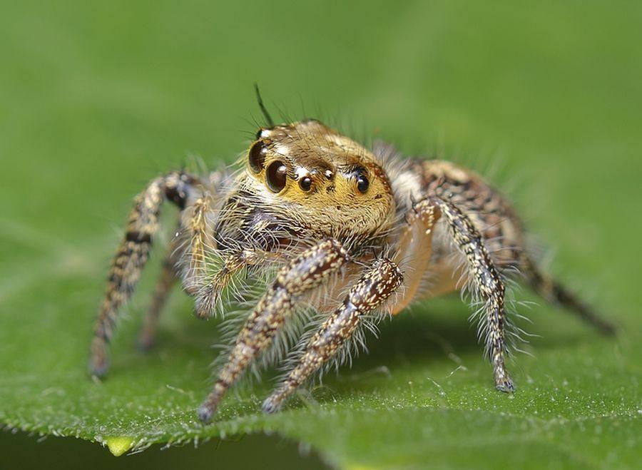 Органи чуттів павукоподібних