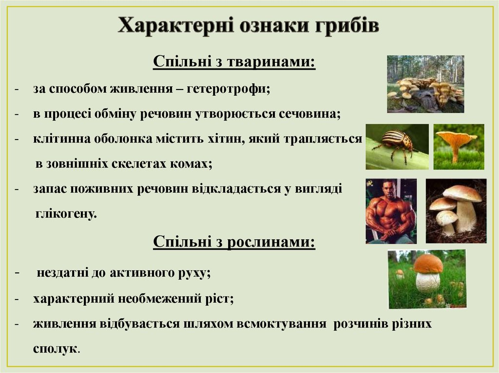 Ознаки грибів