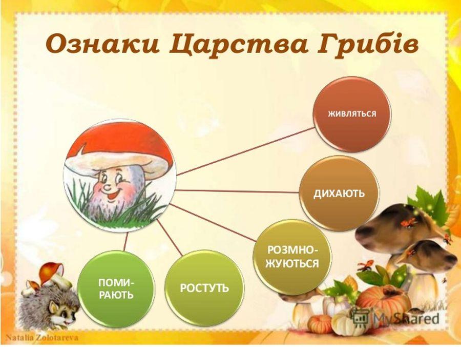 Ознаки царства грибів