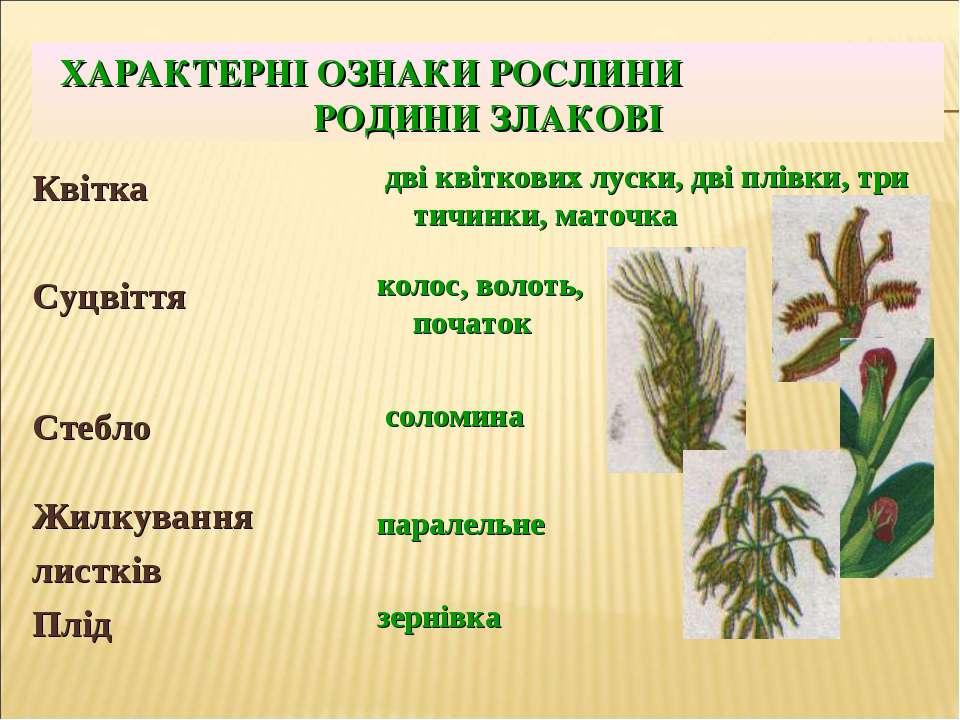 Ознаки злакових рослин