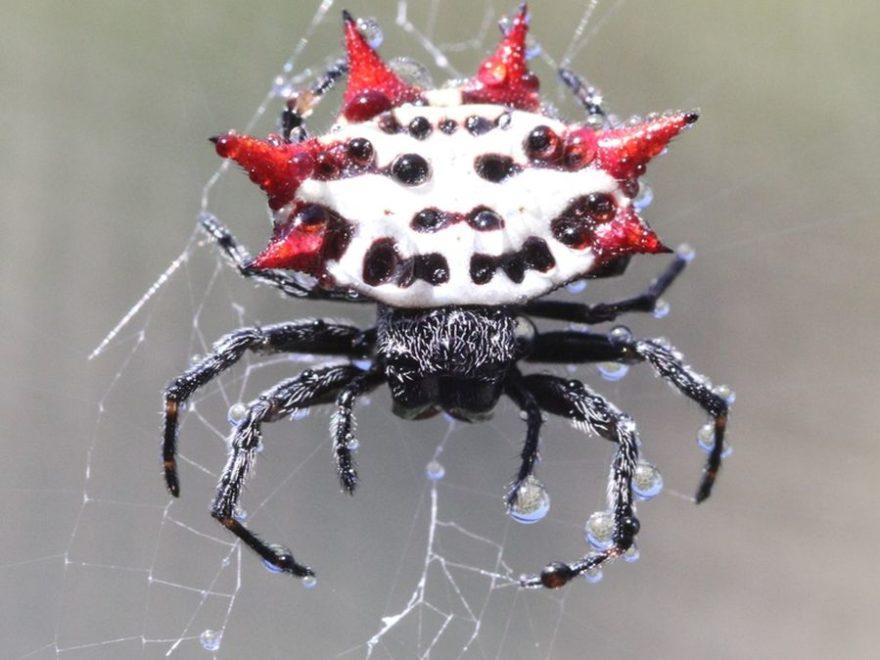 Павук