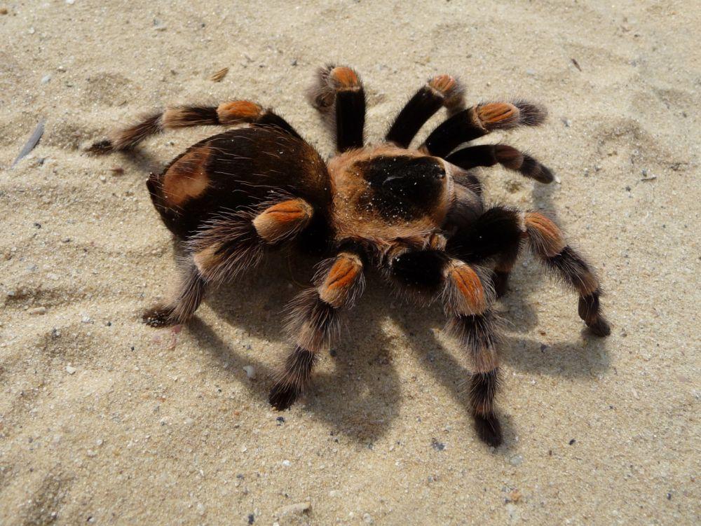 Павук-фото2