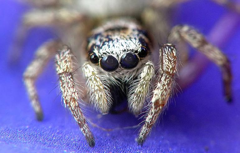 Павук - фото2