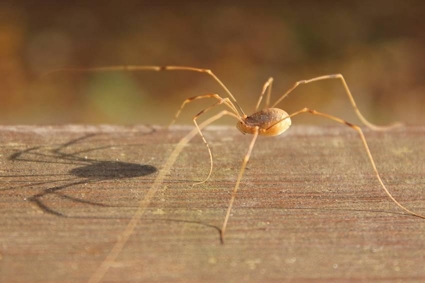 Павукоподібні - приклад