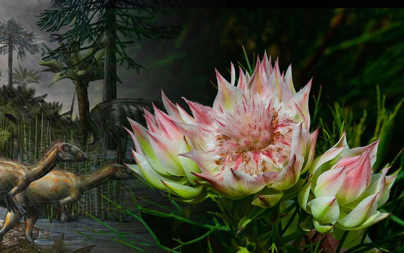 Походження квіткових рослин