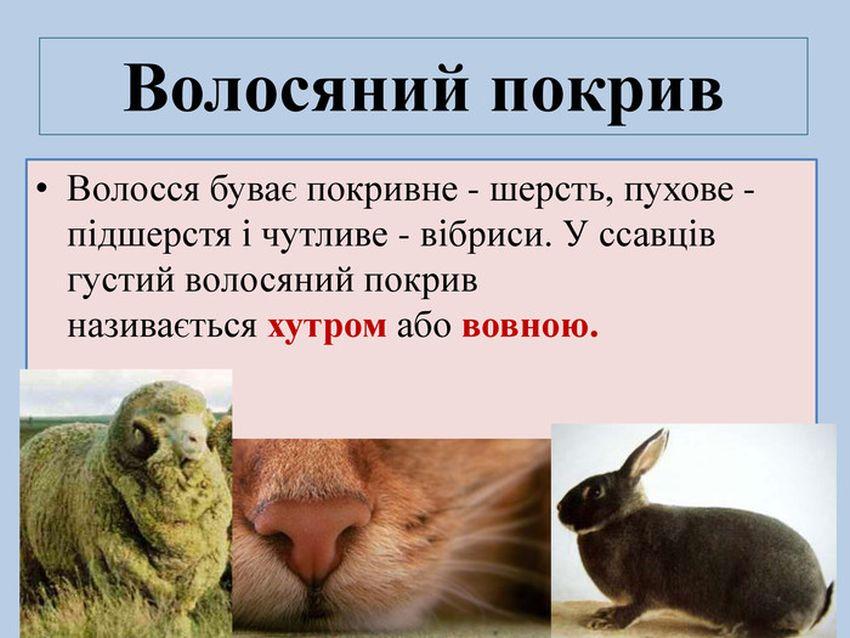 Покривна система ссавців