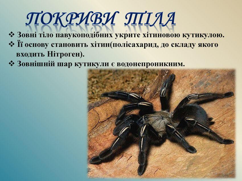 Покриви тіла павукаподібних