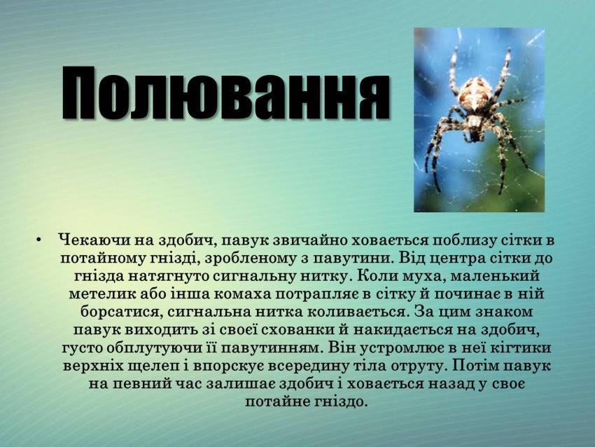 Полювання павука-хрестовика