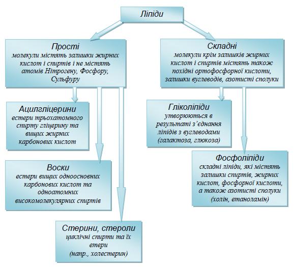 Прості і складні ліпіди - таблиця