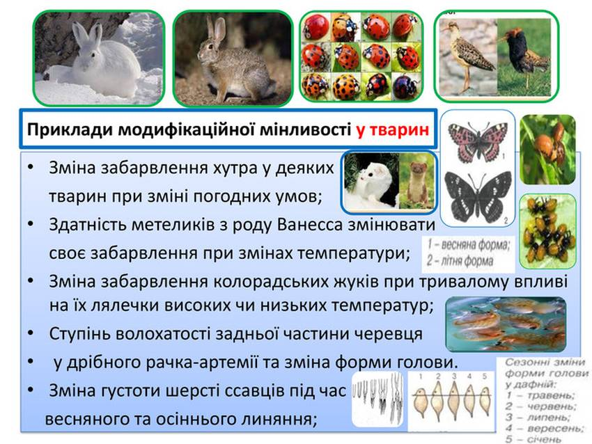 Приклади модифікаційної мінливості у тварин