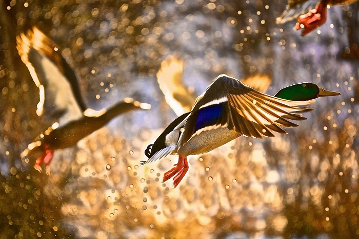 Птахи2