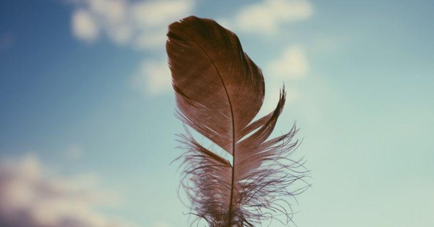 Пташине перо