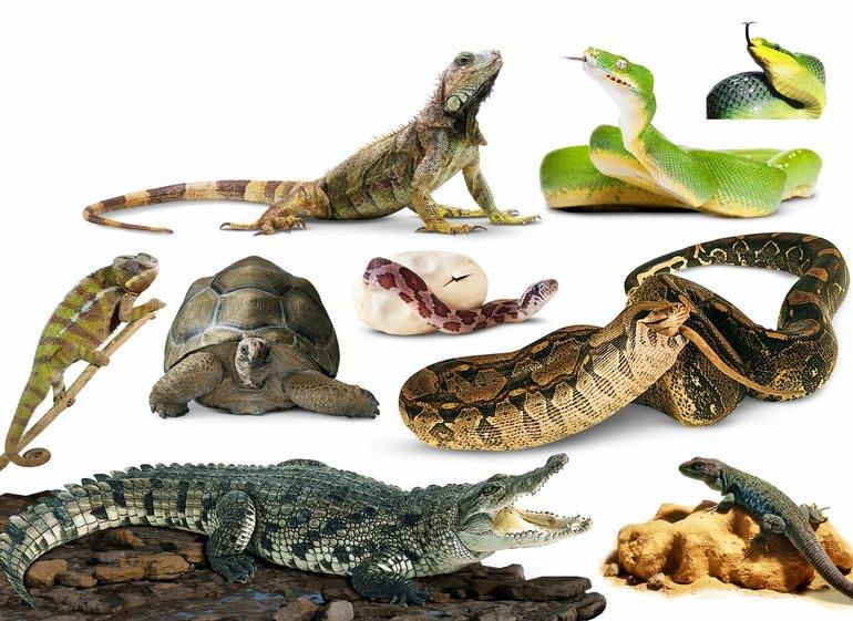 Рептилії