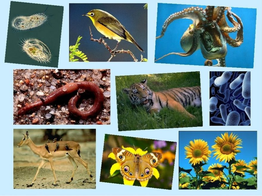 Рівні організації живої природи