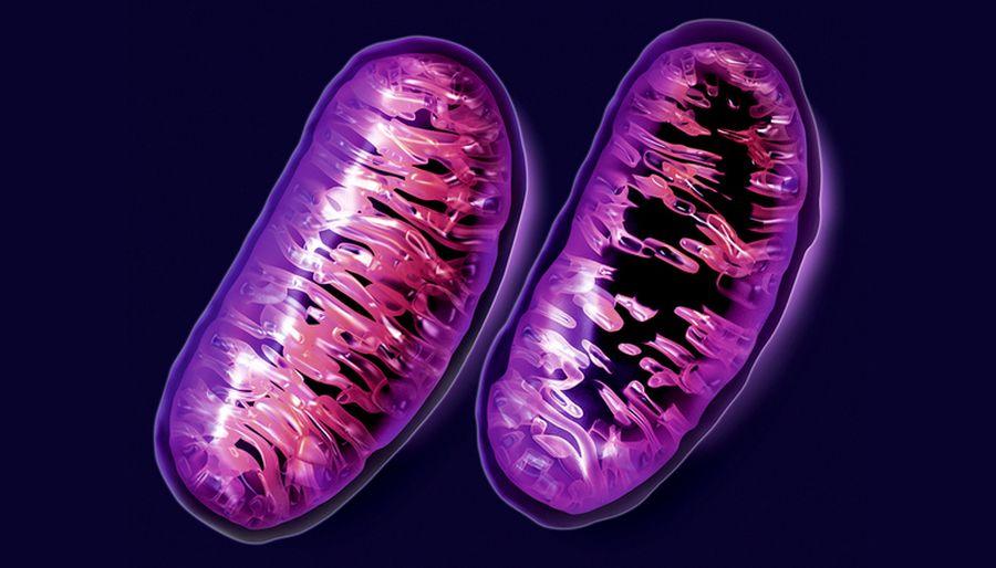 Роль клітин у диханні рослин