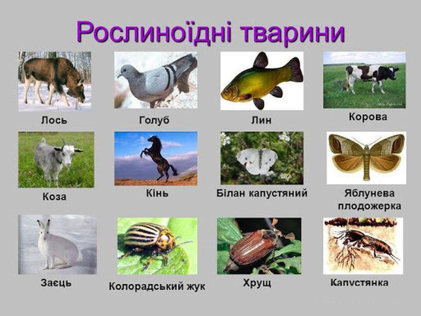 Рослиноїдні тварини - приклад