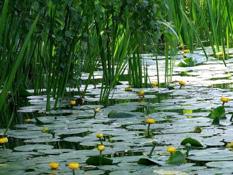 Рослини водного середовища