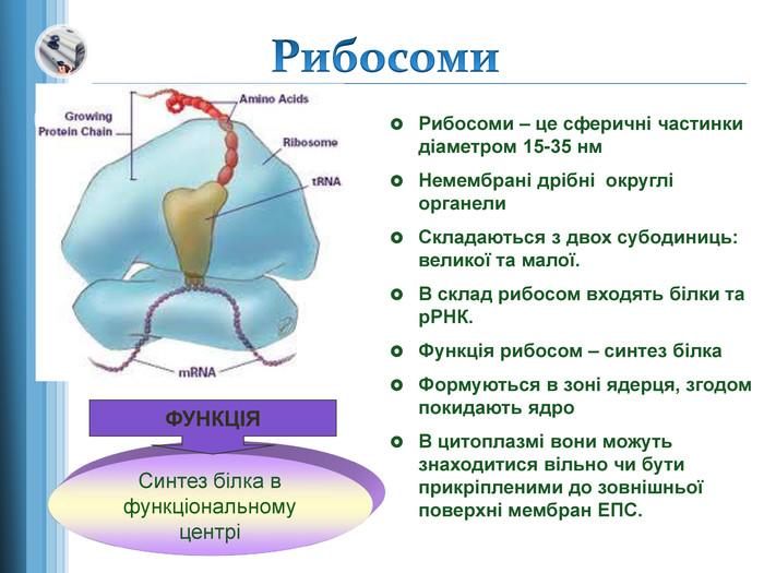 Рибосома - визначення