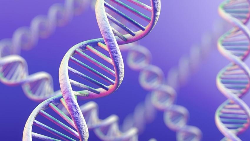 Що таке ДНК