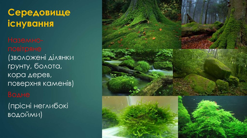 Середовище існування мохоподібних