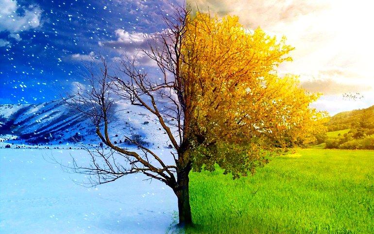 Сезони для рослин