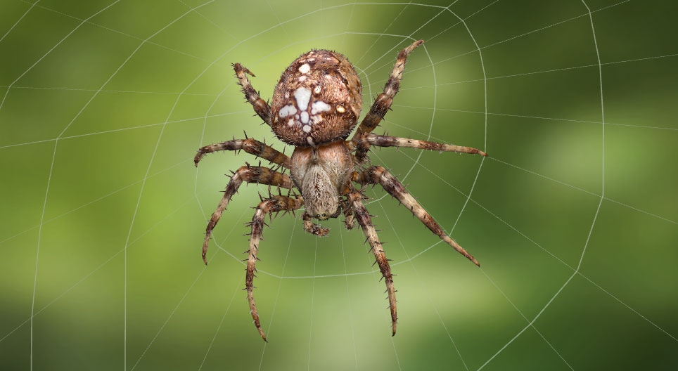 Сітка павука