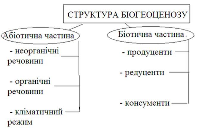 Структура біогеноценозу