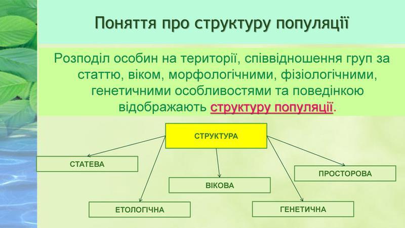 Структура популяції