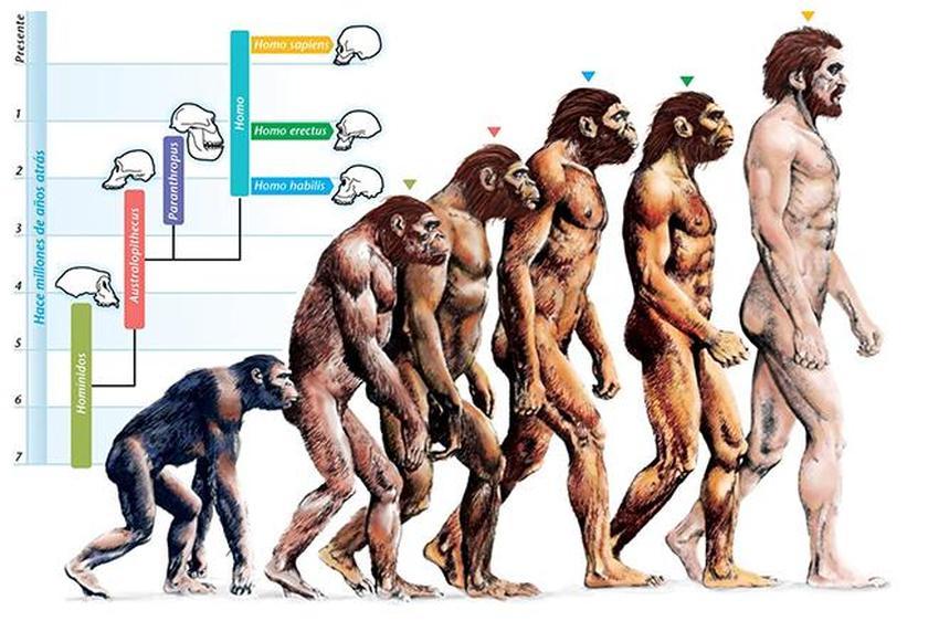 Теорія походження видів Дарвіна