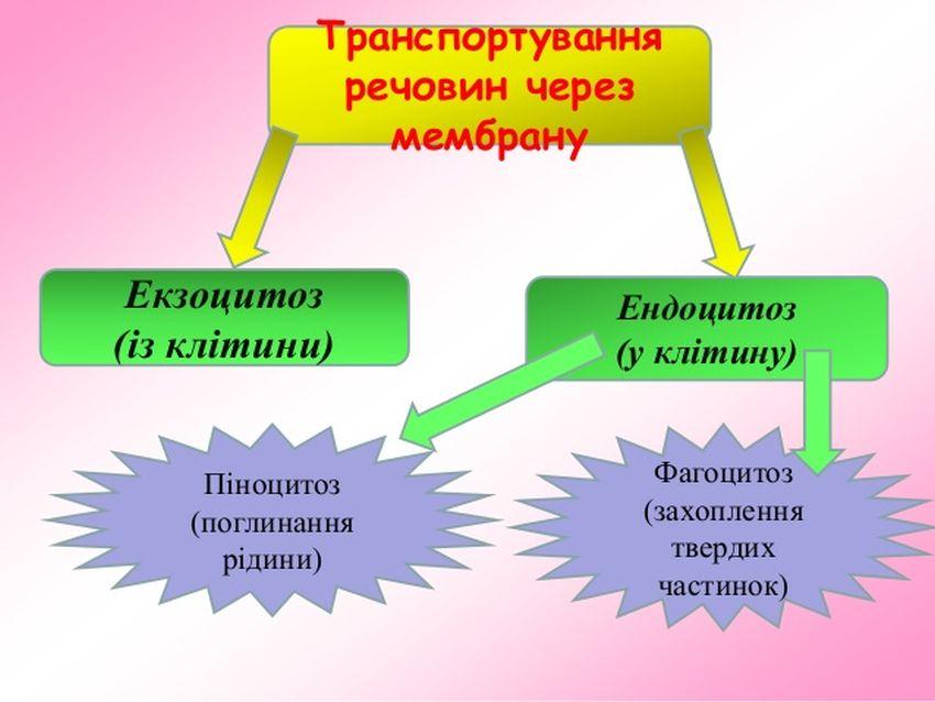 Транспортування речовин через мембрану