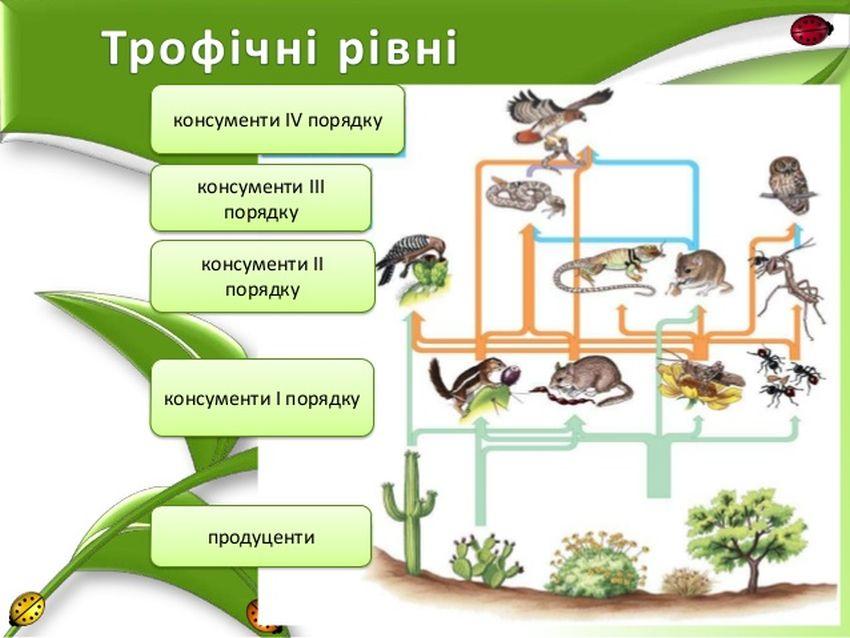 Трофічні рівні харчового ланцюга