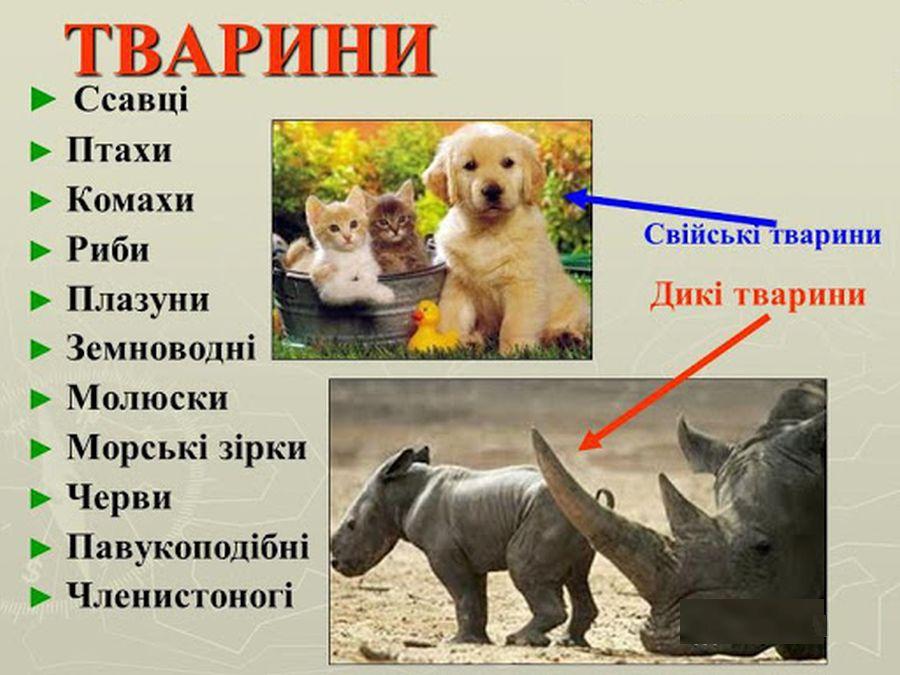 Тварини44