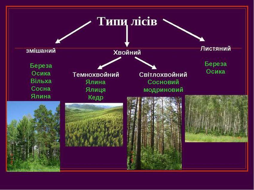 Типи лісів